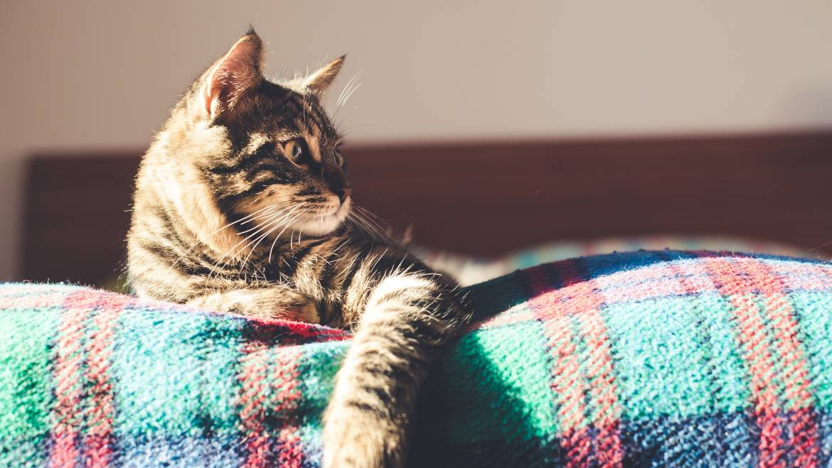 5 Essential Tips to Keep Your Pet Safe